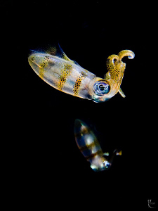 2 juvenile squids